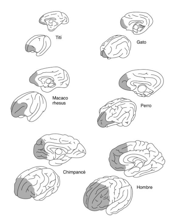 Nexos Sociedad Ciencia Y Literatura Page 50