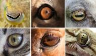 ¿Por qué los ojos de los animales tienen tantas formasdiferentes?